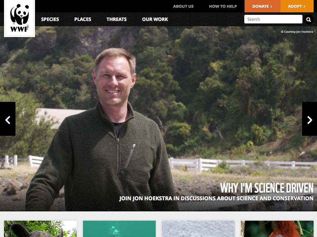World Wildlife Fund Responsive Website on a Tablet