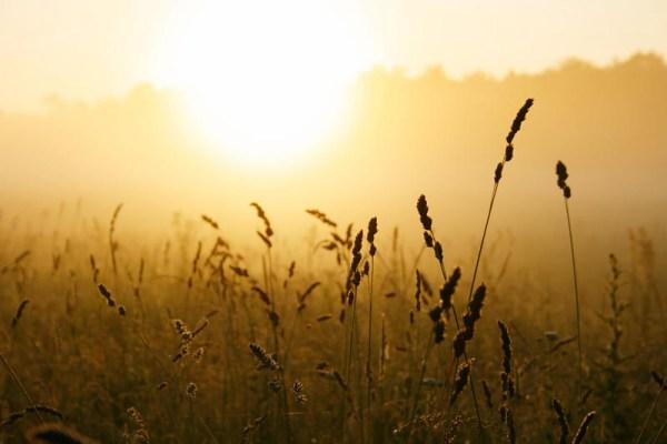 Sunlight Actions
