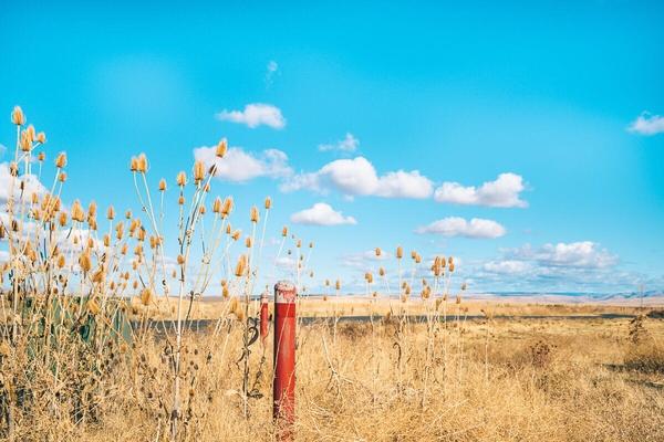 可选颜色怎么用?两个实例教你调出浓烈的秋天氛围+蓝天色调