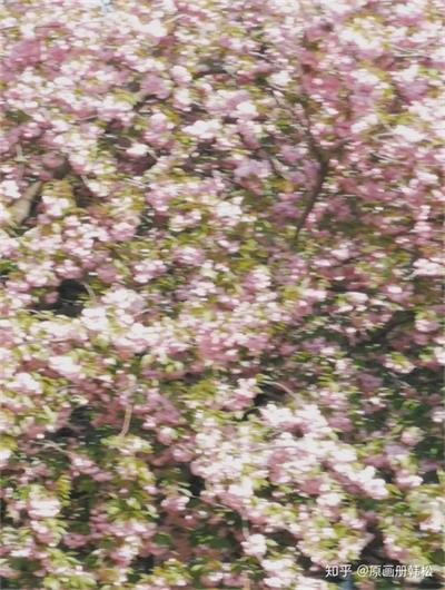 将花卉拍出高级感?看看摄影家们是如何做的