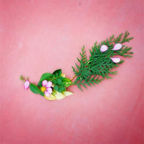 豆瓣的春天花朵艺术创作活动,被网友玩出超多创意!