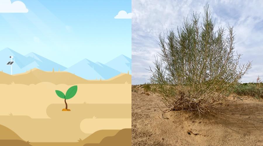 超5亿用户的蚂蚁森林,是如何做好体验设计的?