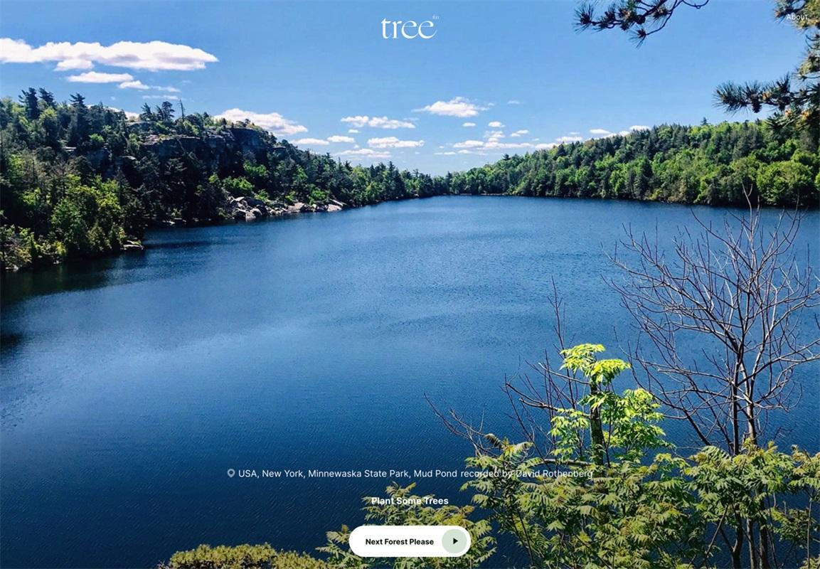 周末森林浴!这个网站在线帮你感受大自然!
